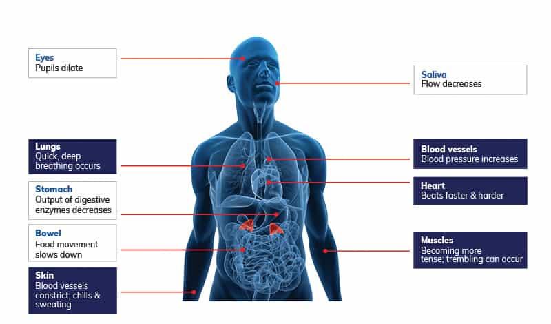 Physiological principles behind NOL (Nociception Level) monitoring